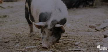 Gestão ambiental para empresas - dejetos animais